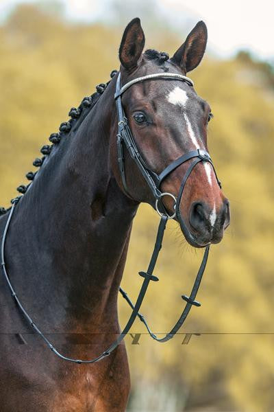 Snaffle bridle with removable flash