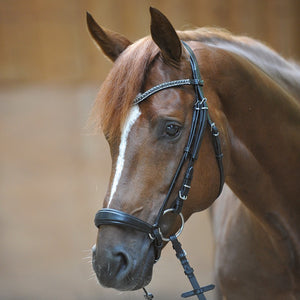 Drop noseband Bridle