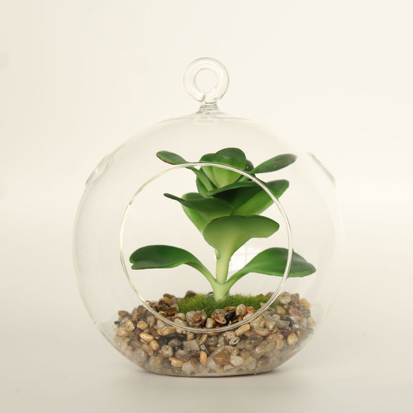 Clear Glass Globe Terrarium
