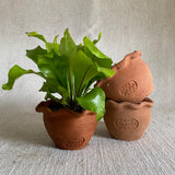 Terra Cotta - Mini Scallop Pot