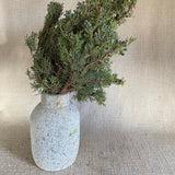 Branches - Blueberry Cedar