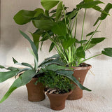 Terra Cotta - Flare Pot Collection