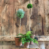 Special: Terra Cotta Putnam Pot Collection