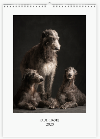 'Sighthounds' calendar 2020 A3