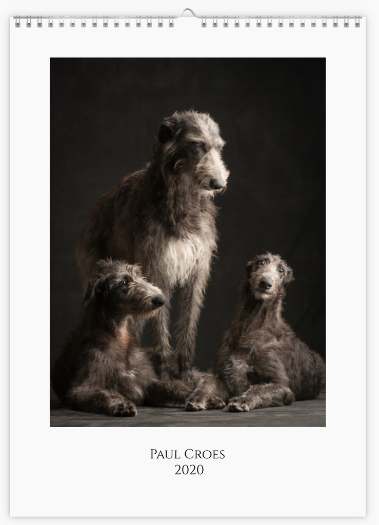 'Sighthounds' calendar 2020 A4