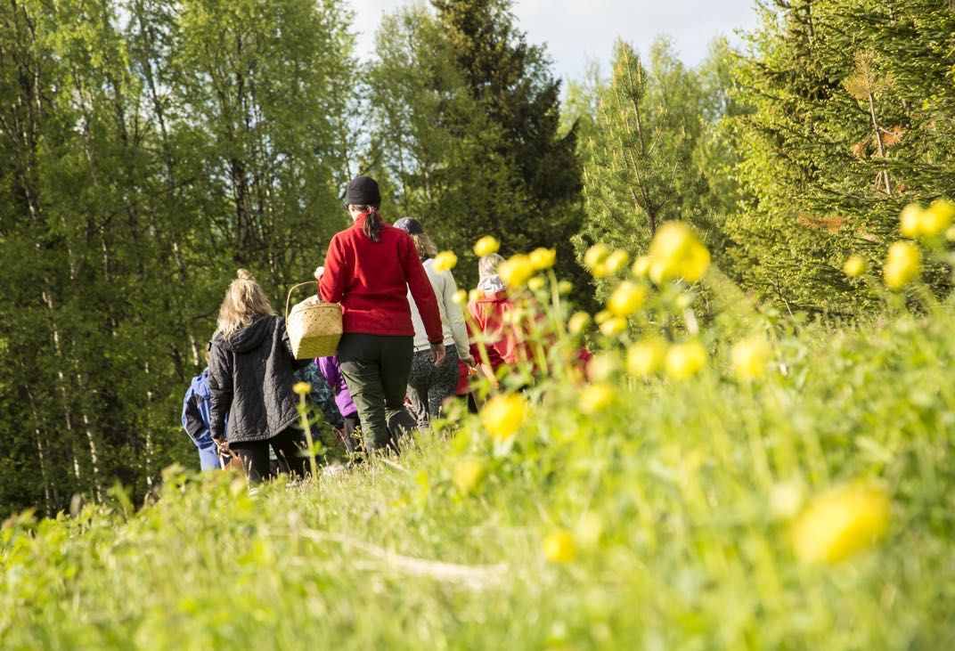 PICTURE OF FORAGING WORKSHOP IN FINLAND, KUVA VILLIYRTTIKURSSISTA