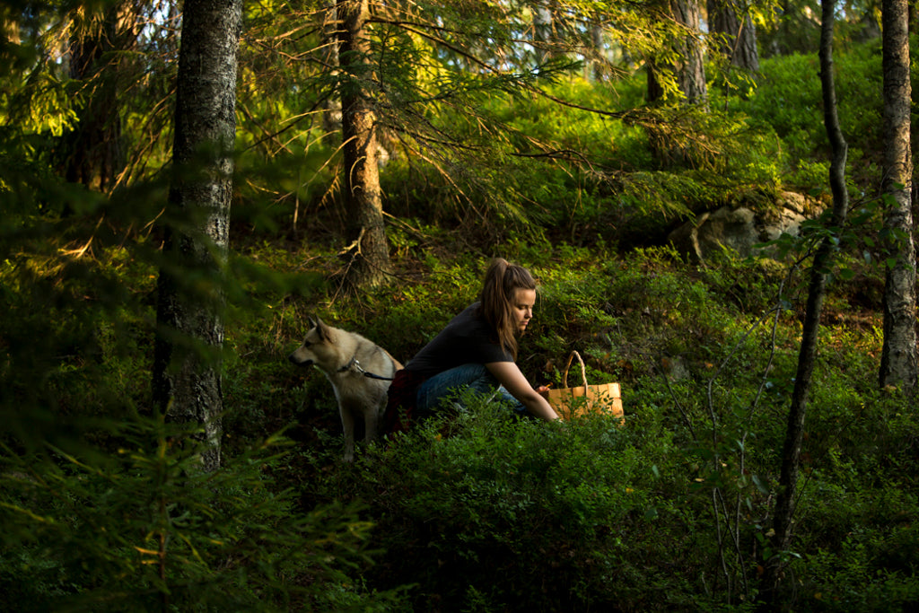 foraging in the Finnish forest
