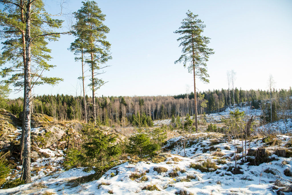 a clearcut forest