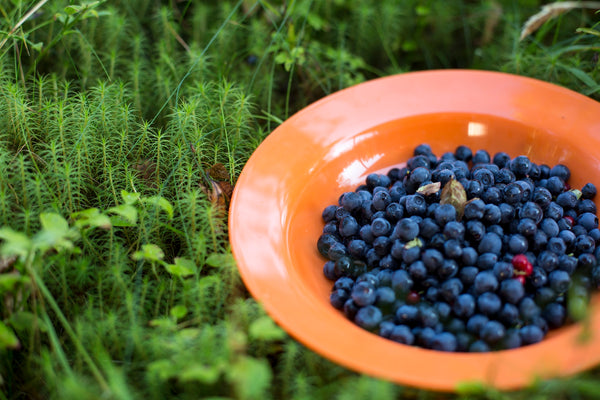 wild Finnish blueberries