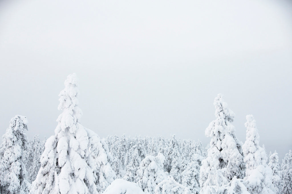 Helsinki Wildfoods Winter Kuusamo Nature