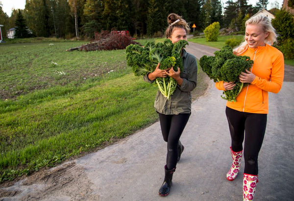 Picture of Pauliina Toivanen and Annika Hannus harvesting kale