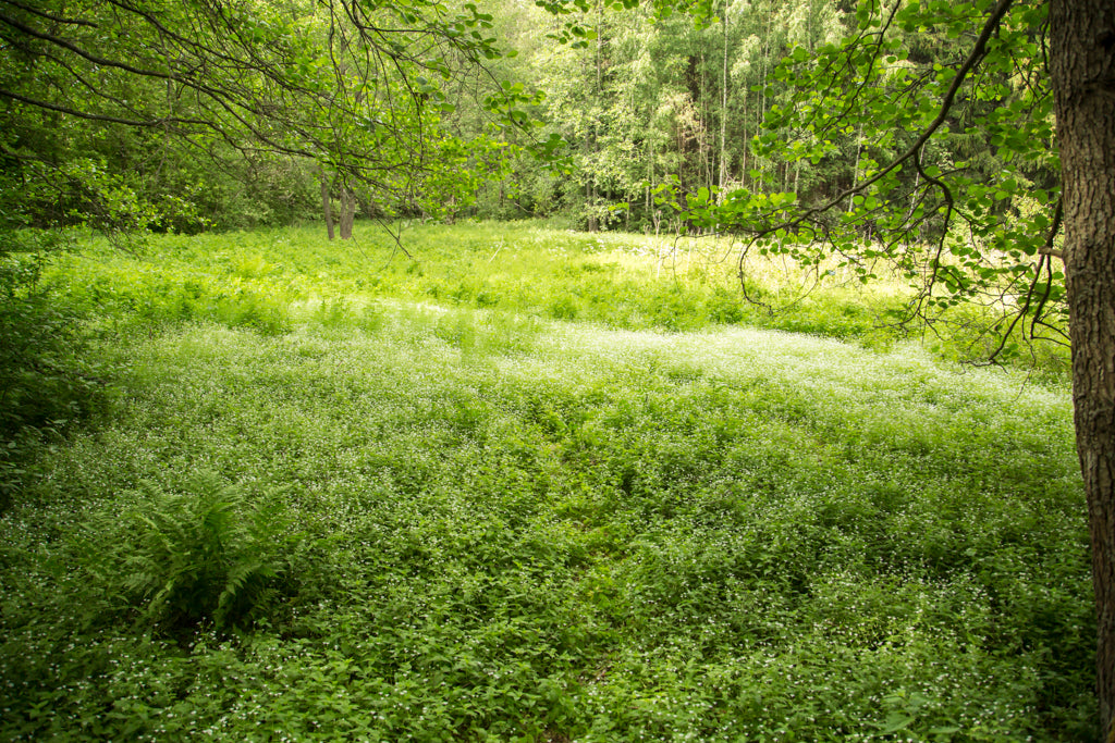 Picture of a meadow in Viikki-Vanhankaupunginlahti, Helsinki nature sight