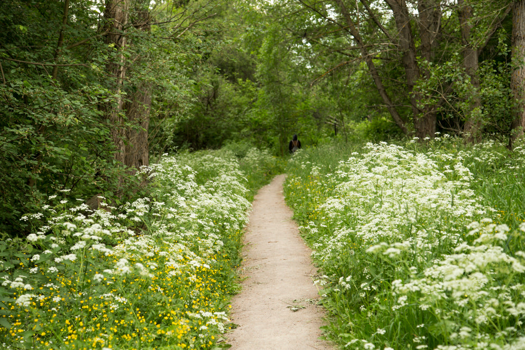 Picture of a path surrounded by meadow flowers in Viikki-Vanhankaupunginlahti, Helsinki nature sight