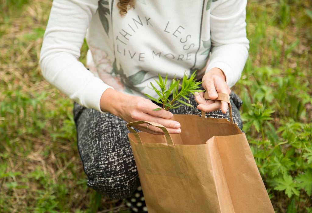 Foraging wild herbs in Finland
