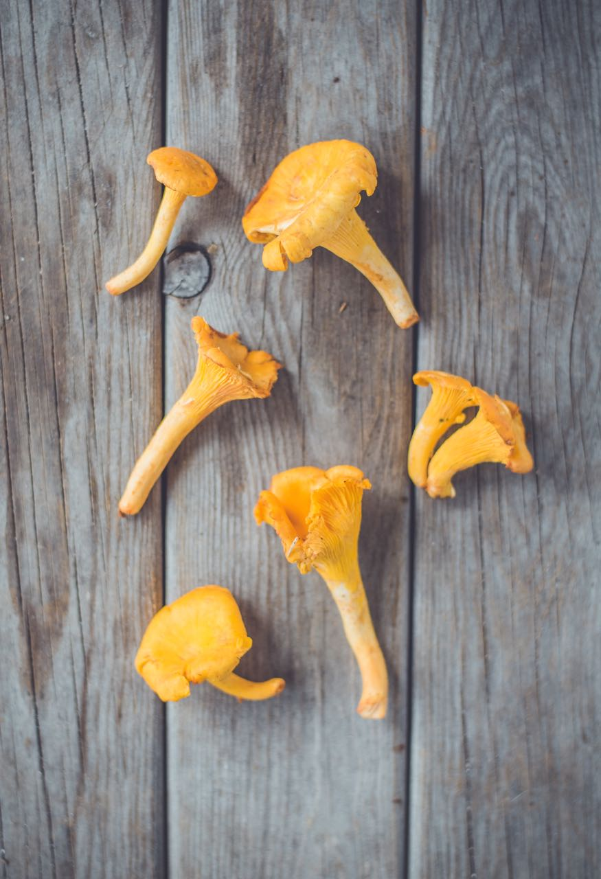 picture of wild chantarelles