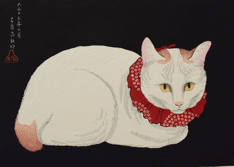 Shironeko  (White Cat)