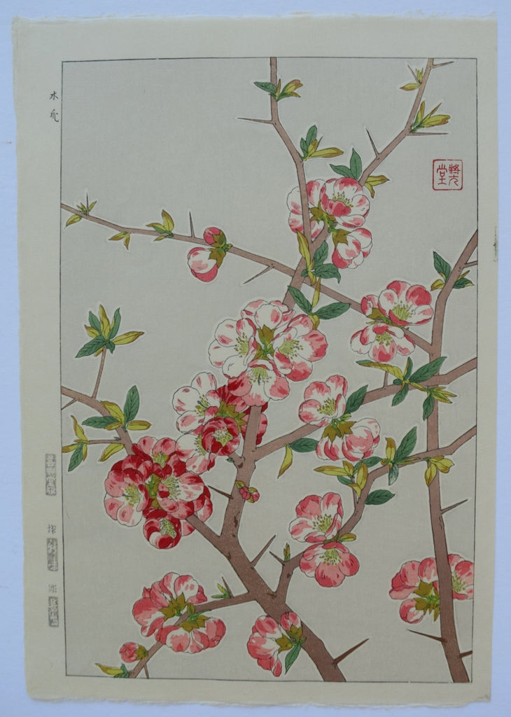 Boke  (Japanese Quince)