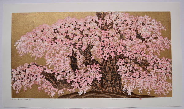 Miharu no Takizakura - Fukushima  (The 1000 year old cherry tree, Fukushima)