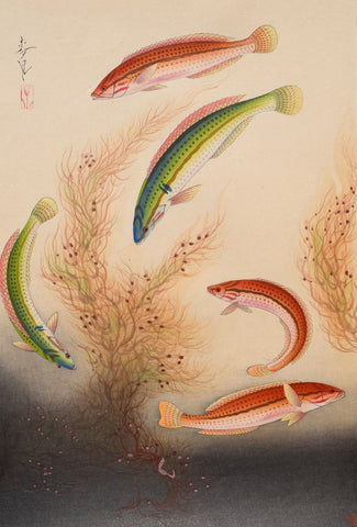 """The Bera""  From Pictures of Japanese Fishes"