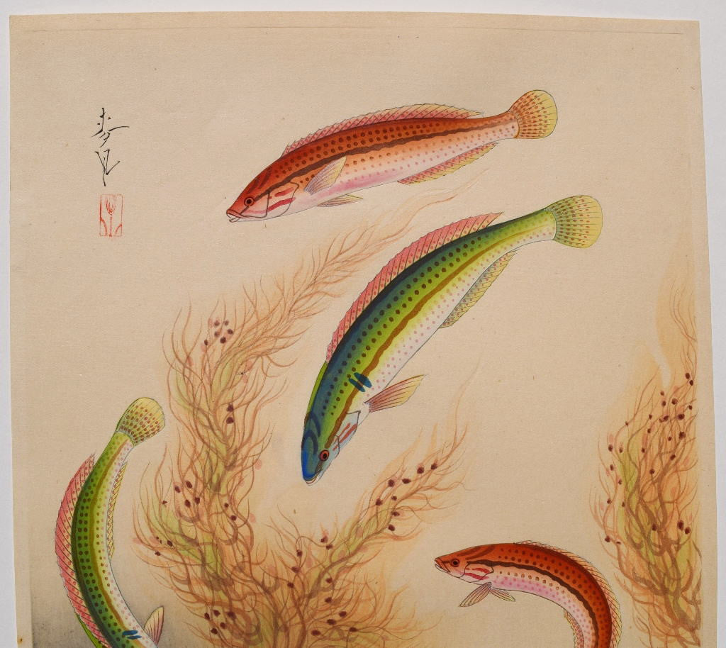 """The Bera""  From Pictures of Japanese Fishes - SAKURA FINE ART"
