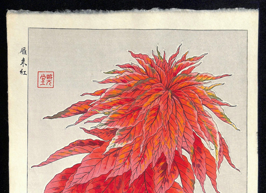 - Hageitou (Amaranthus tricolor)  - First edition -