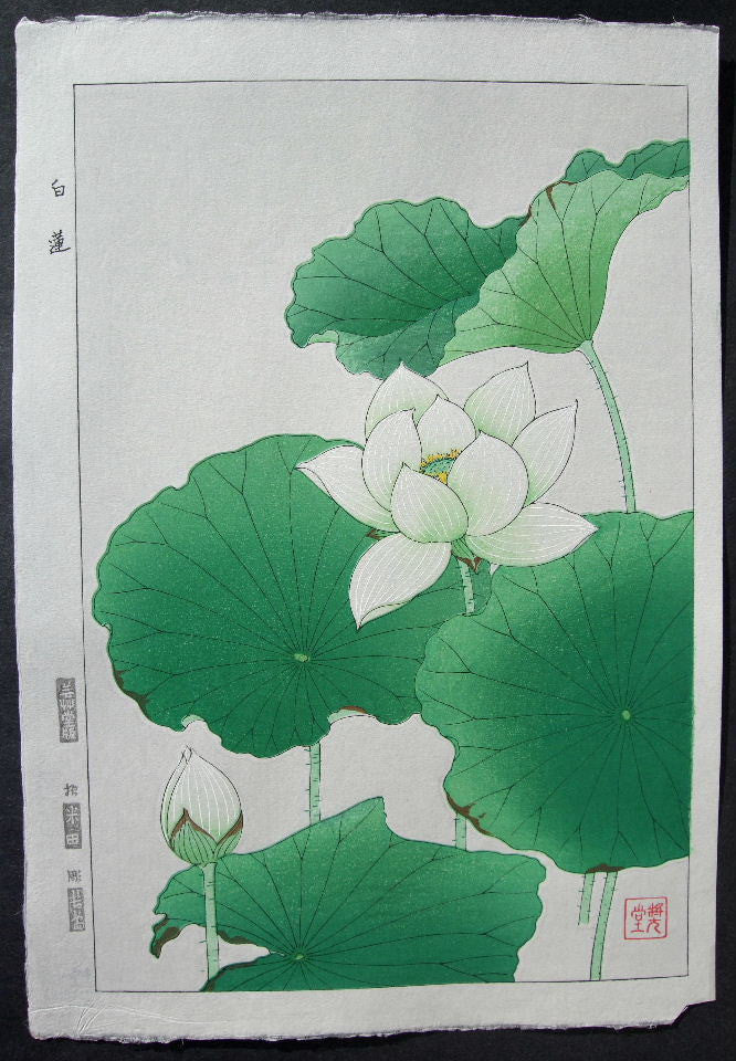 Hakuren  (White Lotus)