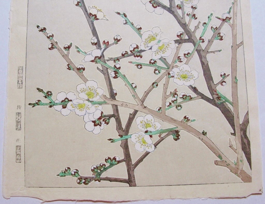 Shiraume  (White Plum Tree)
