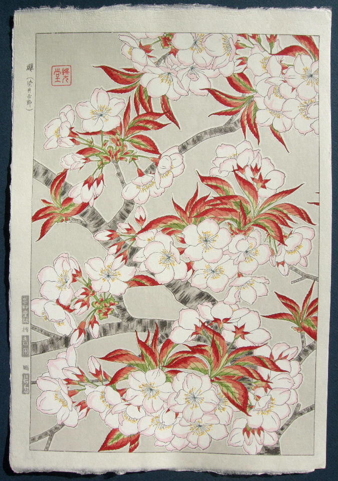 SAKURA- Somei Yoshino (Yoshino Cherry)