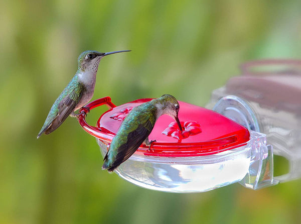Aspects The Gem Hummingbird Feeder