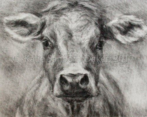 """Funky Cow"" Original Charcoal Drawing by Katie Sanborn Daker"