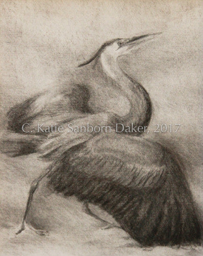 """Aglow"" Charcoal Drawing by Katie Sanborn Daker"