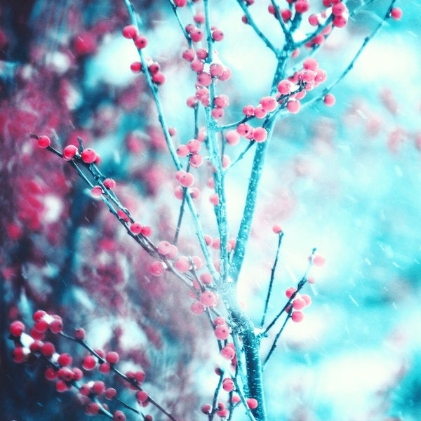 Winter Berries - SERENDIPITY