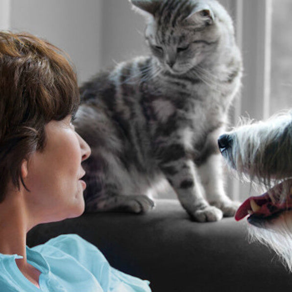 Tell-tale signs that your pet may be in pain (some may surprise you!)