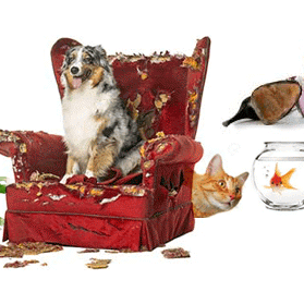 Pet Health Blog: How to help your pet adjust when he is home alone!