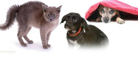 Does YOUR pet have an anxiety problem? How to treat anxiety in dogs & cats and what you can do