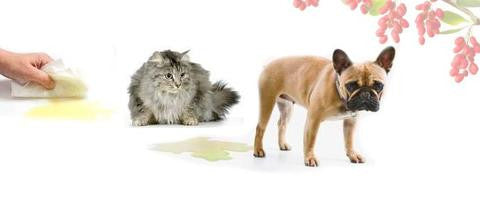 How to recognise the signs & treat BLADDER infections in dogs & cats