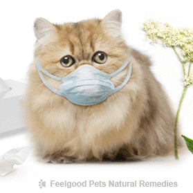 Cat Flu: What YOU can do to help your cat naturally!