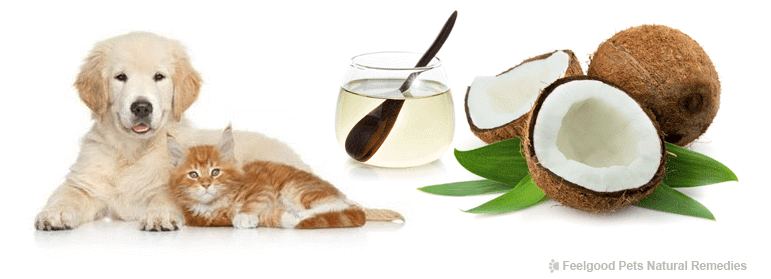 Coconut Oil for pets! Why coconut oil is a must to keep your dog or cat healthy