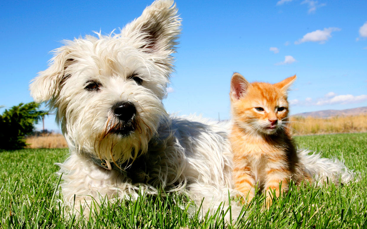 Natural safe flea and tick treatments