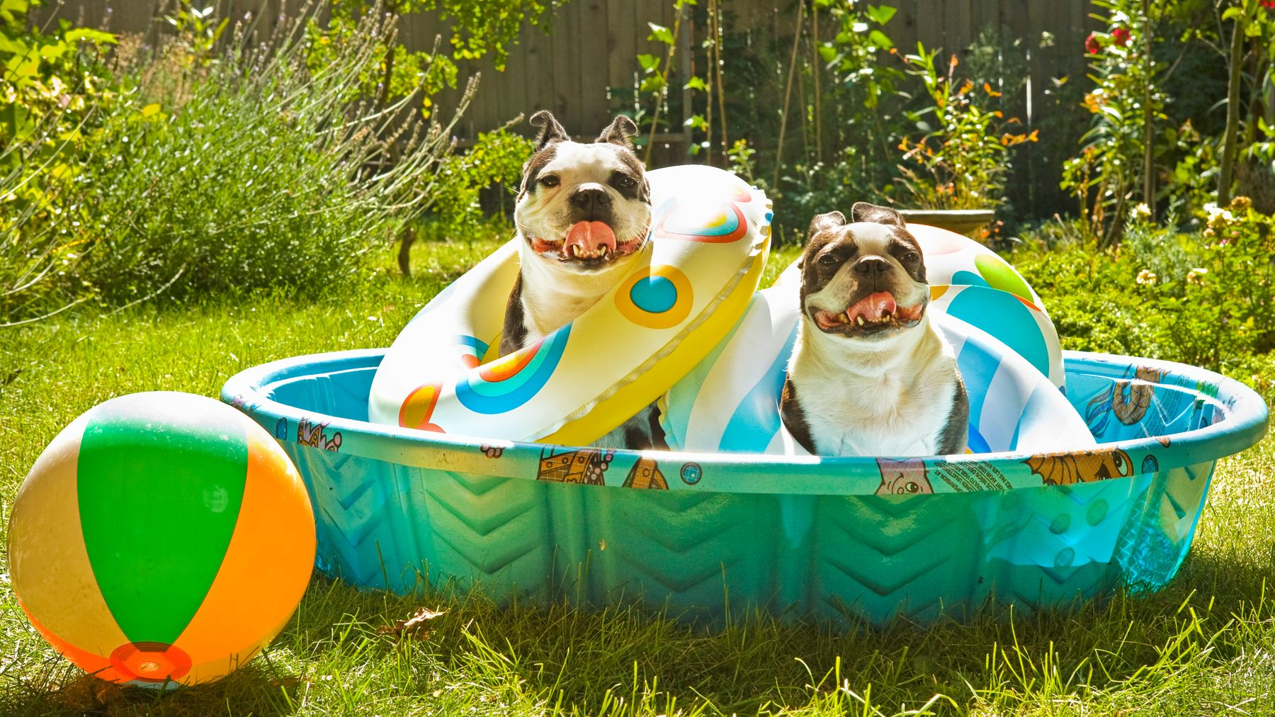 Tips on how to avoid your pet overheating in warm, summer months