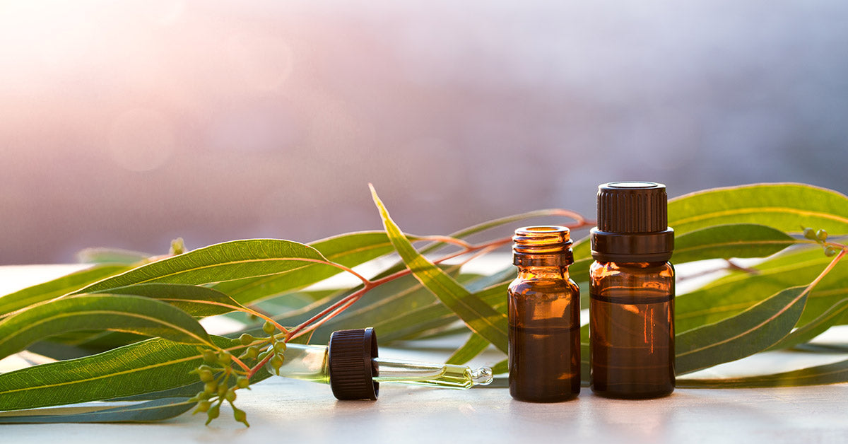 7 Health Benefits of Eucalyptus Essential Oil