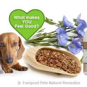 Health benefits of flaxseed oil for dogs, cats & horses