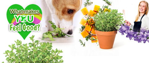 Herbal biscuit recipes for dogs