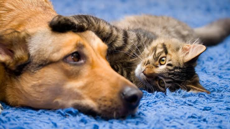Bad breath in dogs and cats – how to treat and prevent it naturally!