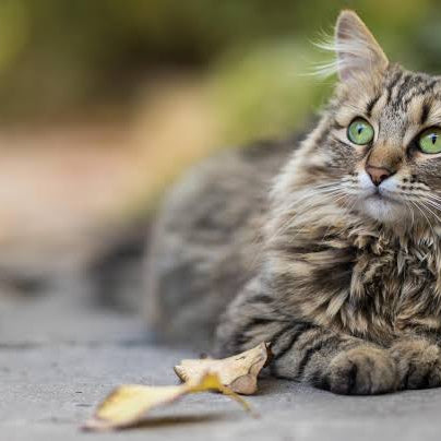 Debunking common myths about pet skin & coat health