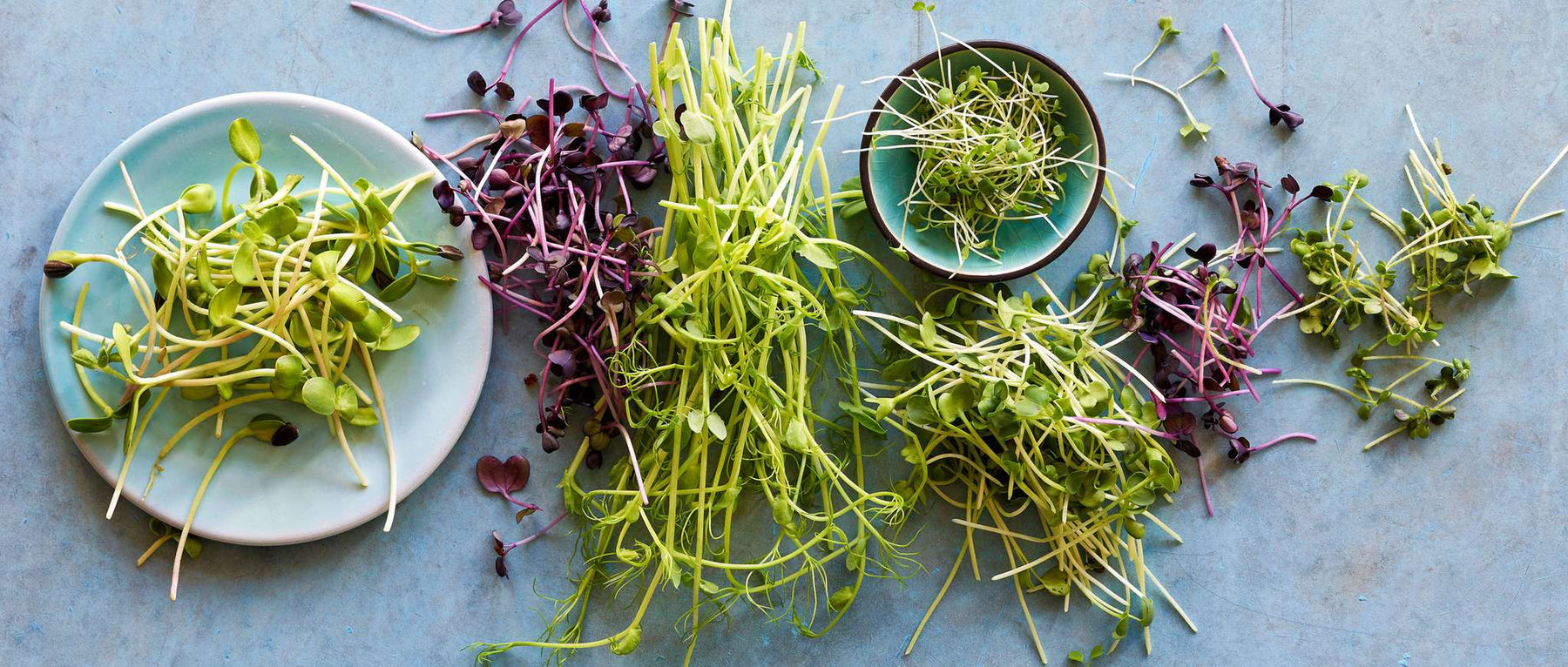 Health benefits of microgreens and how to grow your own at home