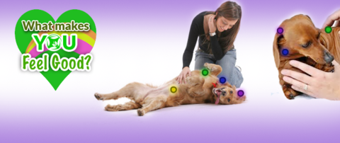 Dog massage: What are the benefits & how to massage your dog! View Save