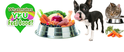Is your pet a picky eater? Tips to help get your pet to eat normally again!