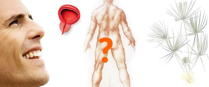 Prostate 101: How well do you know the Prostate gland?