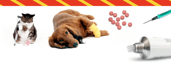 Is your pet taking steroids, anti-inflammatories or cortisone?